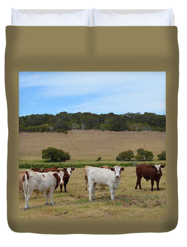 Margaret River Duvet Cover featuring the photograph Bulls And Cow by Cheryl Miller