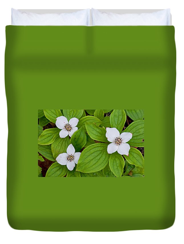 Beautiful Duvet Cover featuring the photograph Bunchberries by Gerald DeBoer