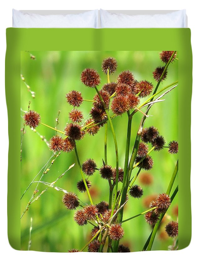 Bur-reed Duvet Cover featuring the photograph Bur-reed by Zina Stromberg