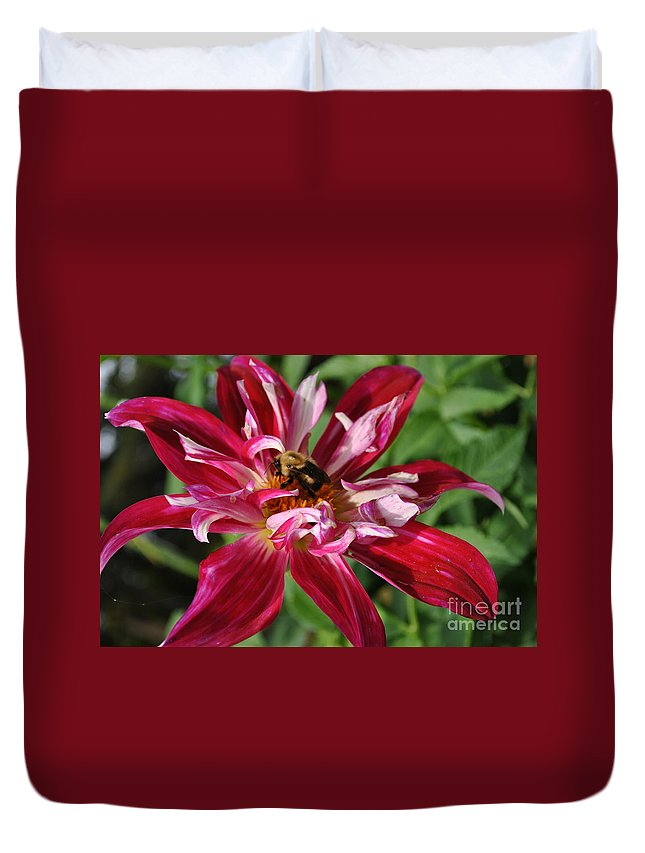 Bee Duvet Cover featuring the photograph Burgundy Bee by Charlotte Stevenson