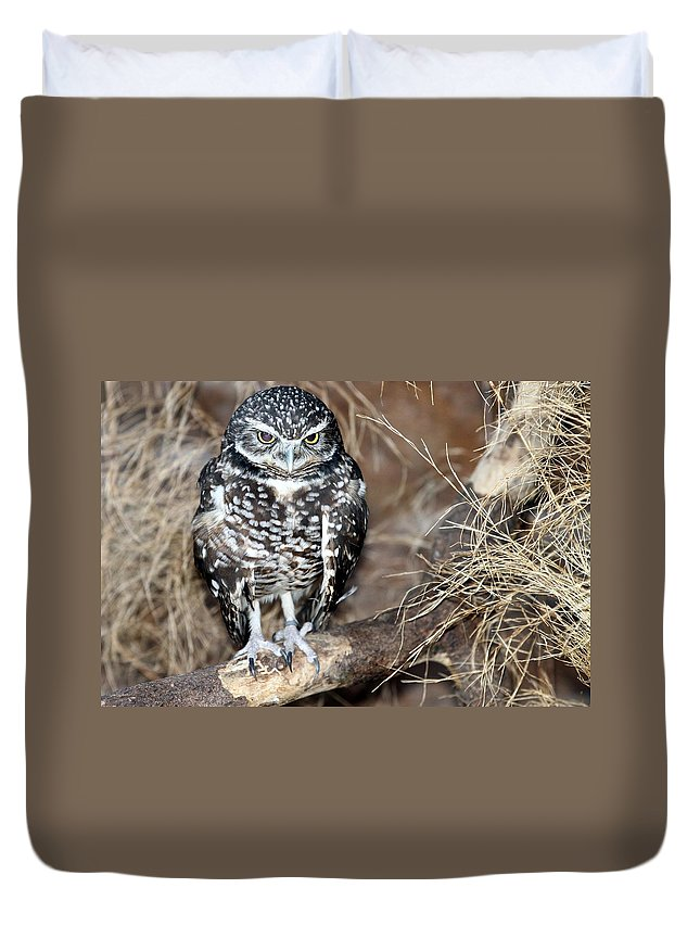 Burrowing Owl Duvet Cover featuring the photograph Burrowing Owl by Elizabeth Winter