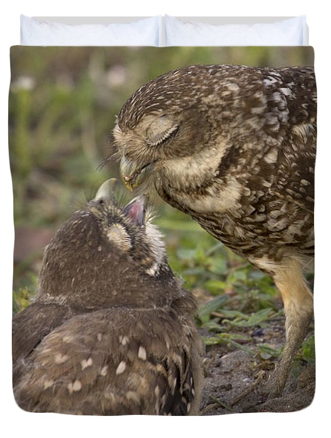 Burrowing Owl Duvet Cover featuring the photograph Burrowing Owl Feeding It's Chick Photo by Meg Rousher