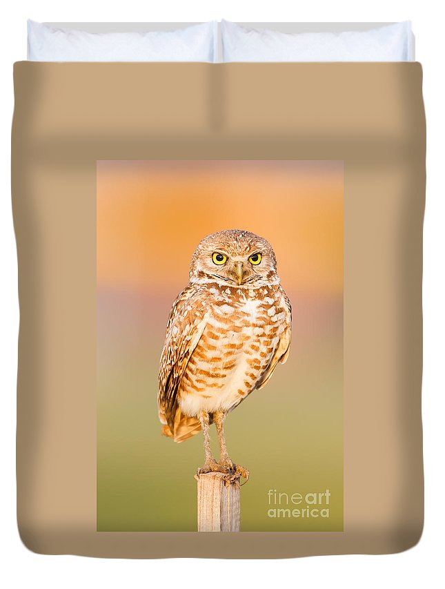 Clarence Holmes Duvet Cover featuring the photograph Burrowing Owl II by Clarence Holmes
