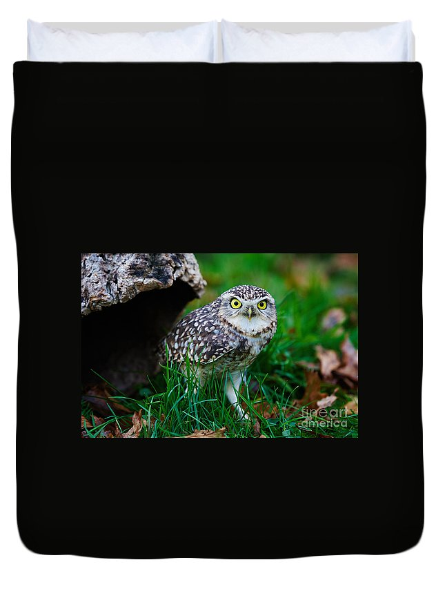Closeup Duvet Cover featuring the photograph Burrowing Owl by Nick Biemans