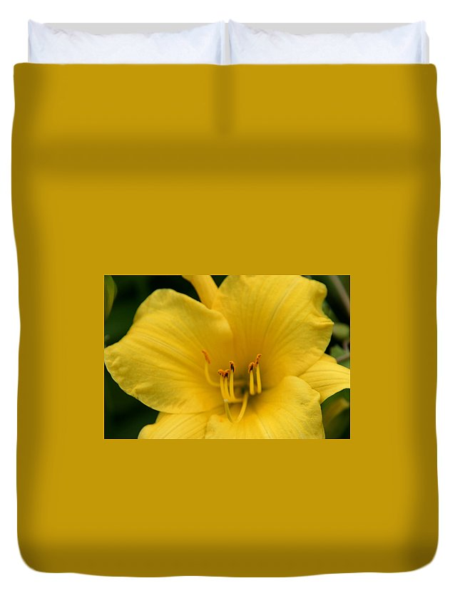 Burst Of Yellow Duvet Cover featuring the photograph Burst Of Yellow by Denyse Duhaime