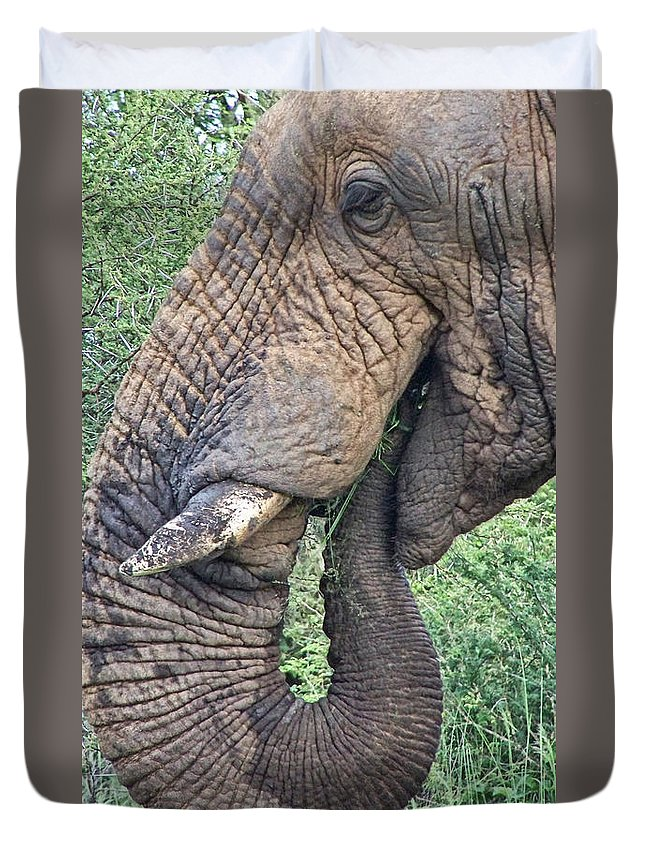 Old Duvet Cover featuring the photograph Bush Treat by Douglas Barnard