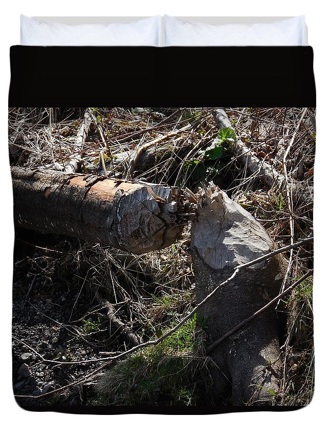 Logs Duvet Cover featuring the photograph Busy Busy Beavers by Teresa A Lang
