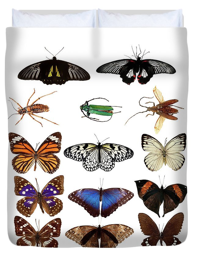 Common Blue Butterfly Duvet Cover featuring the photograph Butterflies And Beetles by Mashabuba