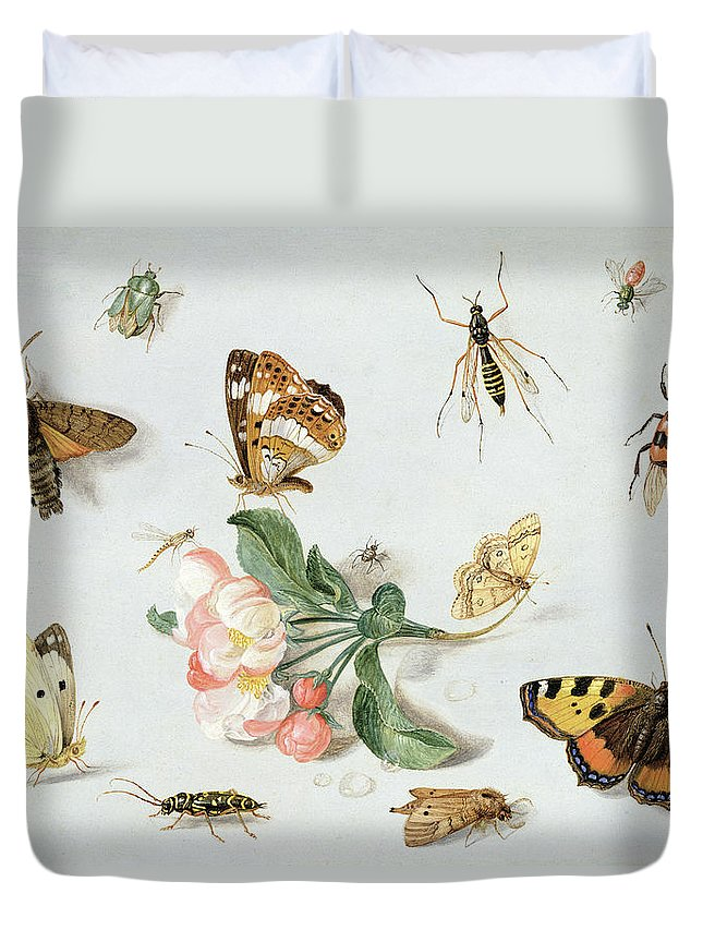 Butterfly Duvet Cover featuring the painting Butterflies Moths And Other Insects With A Sprig Of Apple Blossom by Jan Van Kessel