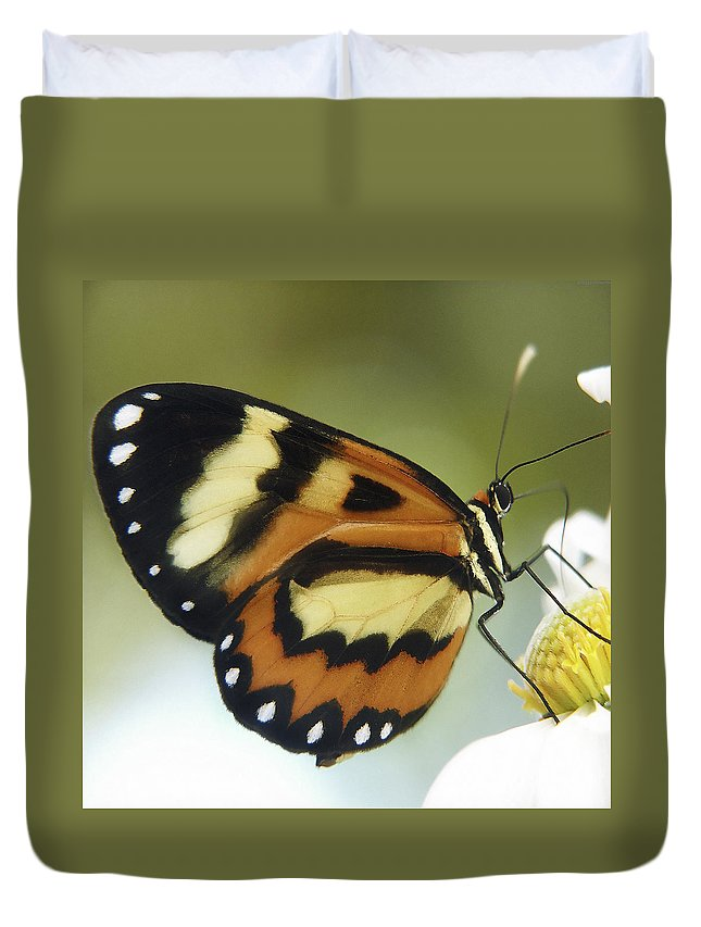 Butterfly Duvet Cover featuring the photograph Butterfly 013 by Ingrid Smith-Johnsen