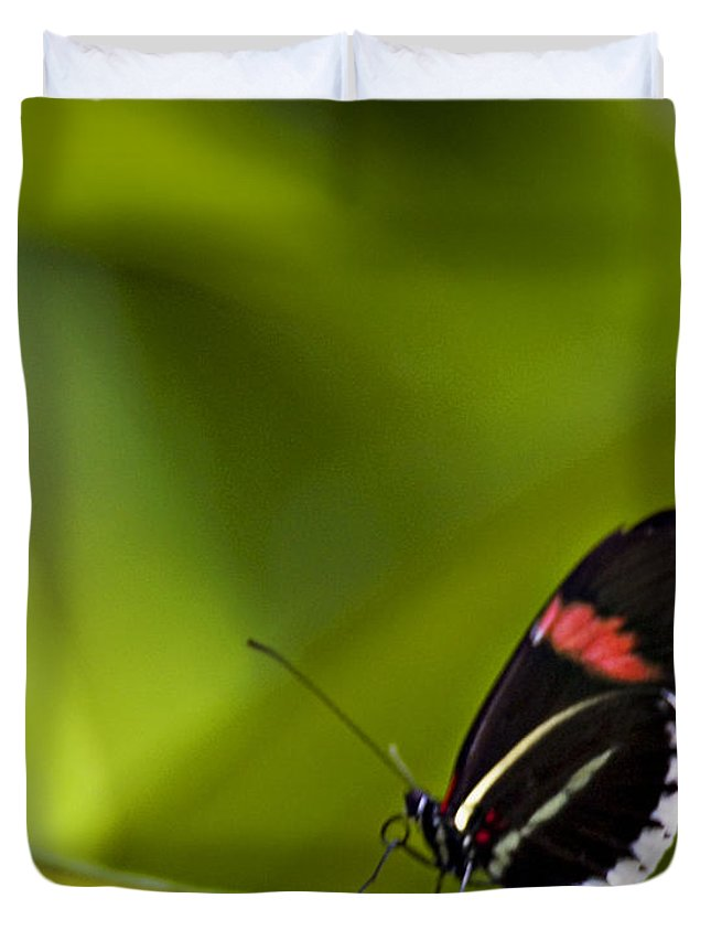 Butterfly Duvet Cover featuring the photograph Butterfly 14 by Walter Herrit