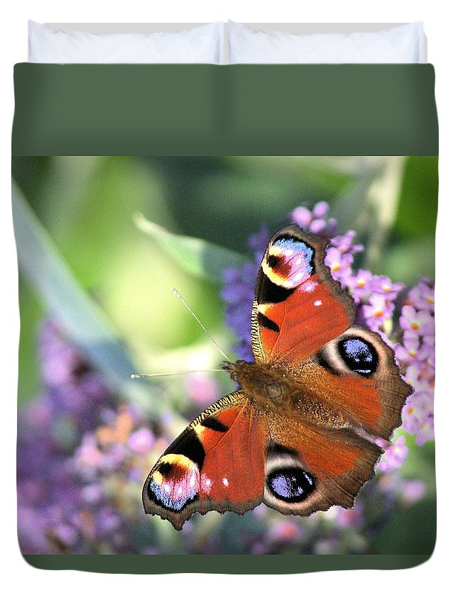 Butterfly Duvet Cover featuring the photograph Butterfly On Buddleia by Gordon Auld