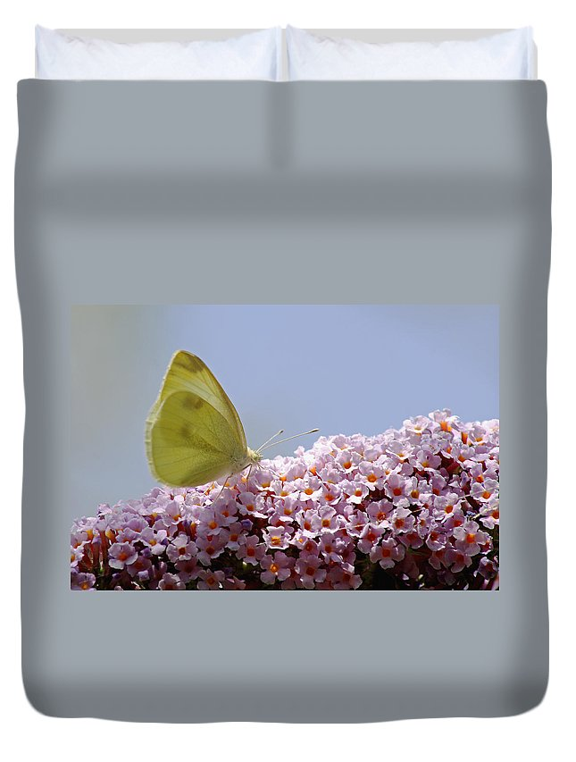 Butterfly Duvet Cover featuring the photograph Butterfly On Buddleia by Tony Murtagh