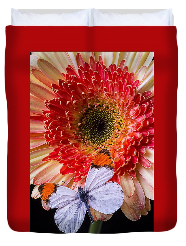 Butterfly Duvet Cover featuring the photograph Butterfly On Daisy by Garry Gay