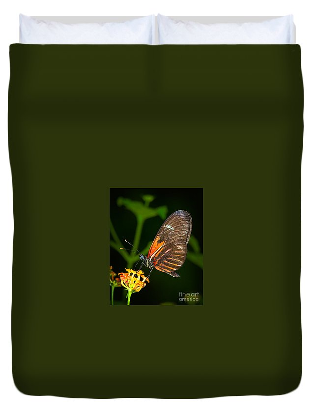 Butterfly Duvet Cover featuring the photograph Butterfly On Orange Bloom by Photos By Cassandra