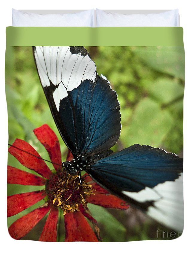 Heiko Duvet Cover featuring the photograph Butterfly Sara Longwing II by Heiko Koehrer-Wagner