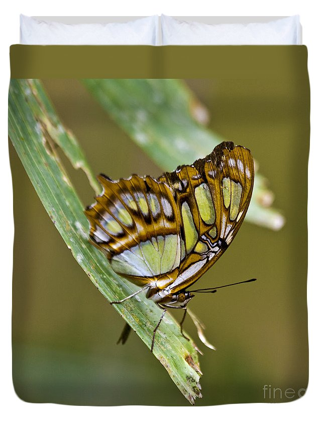 Butterfly Duvet Cover featuring the photograph Butterfly Siproeta Stelenes by Heiko Koehrer-Wagner