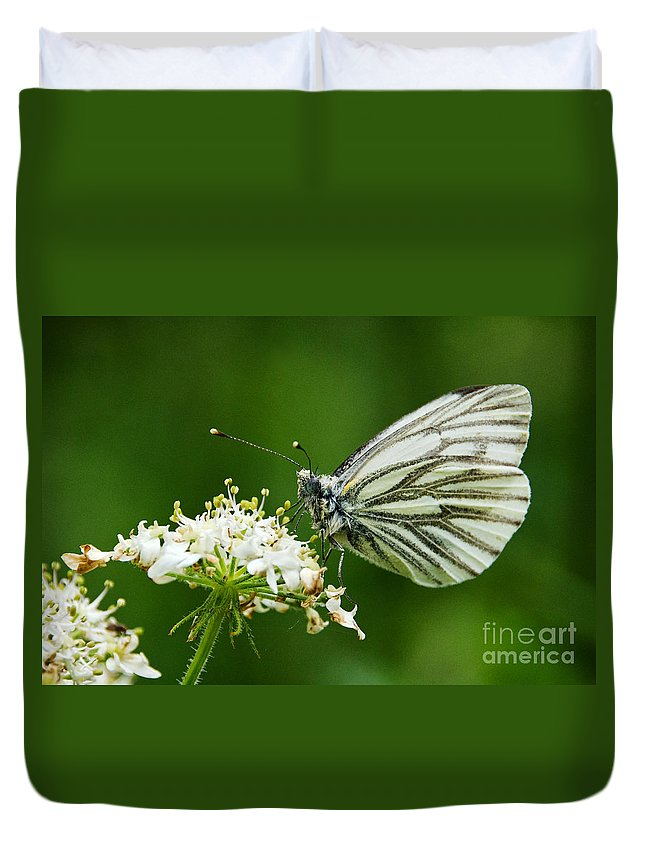 Pieris Rapae Duvet Cover featuring the photograph Cabbage Butterfly by Susie Peek