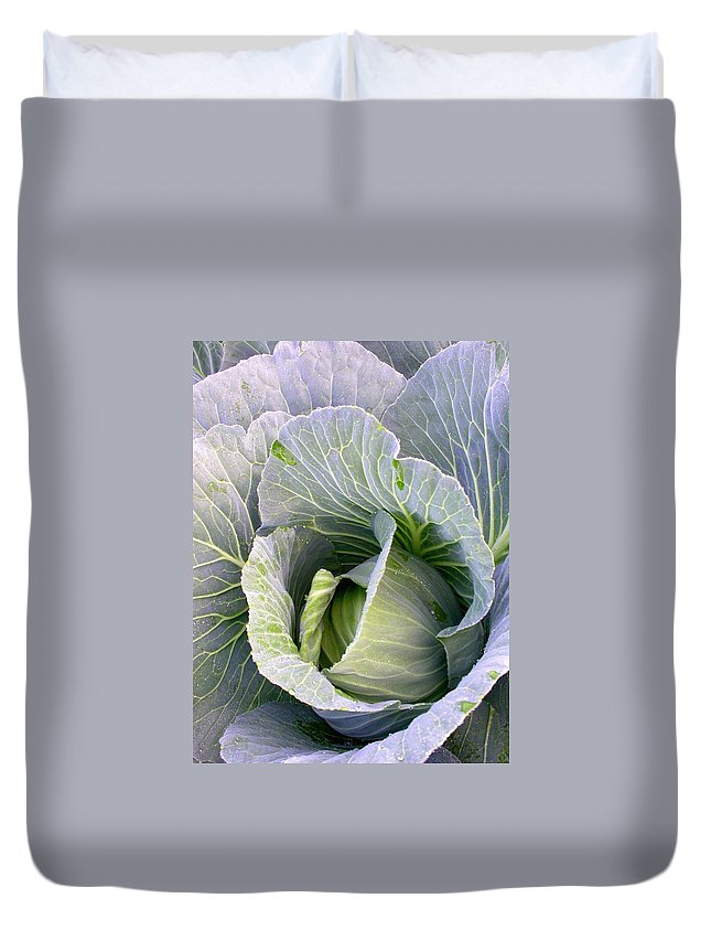 Cabbage Duvet Cover featuring the photograph Cabbage Still Life by Cynthia Wallentine