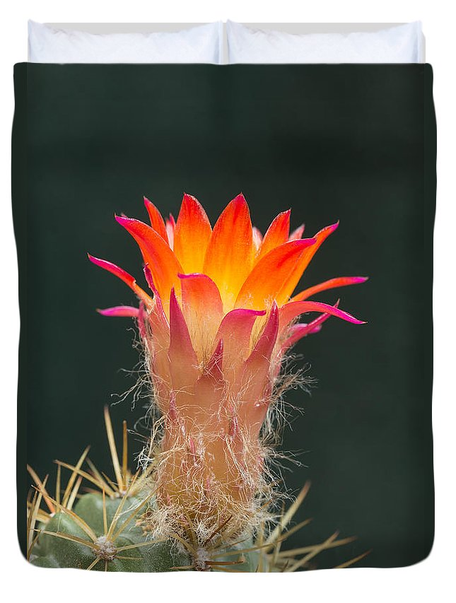 Flower Duvet Cover featuring the photograph Cactus Flower by Jaroslav Frank