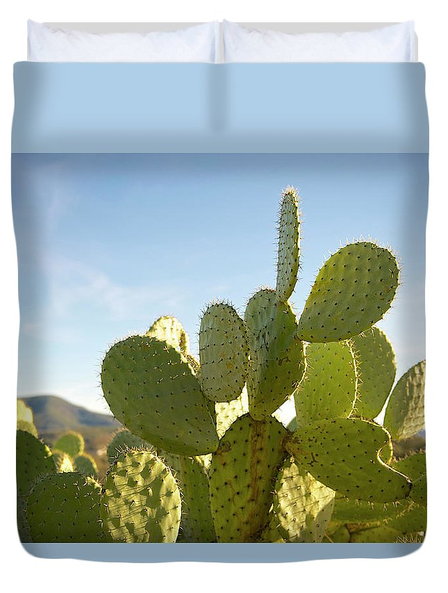Sharp Duvet Cover featuring the photograph Cactus Patch by Hilary Brodey