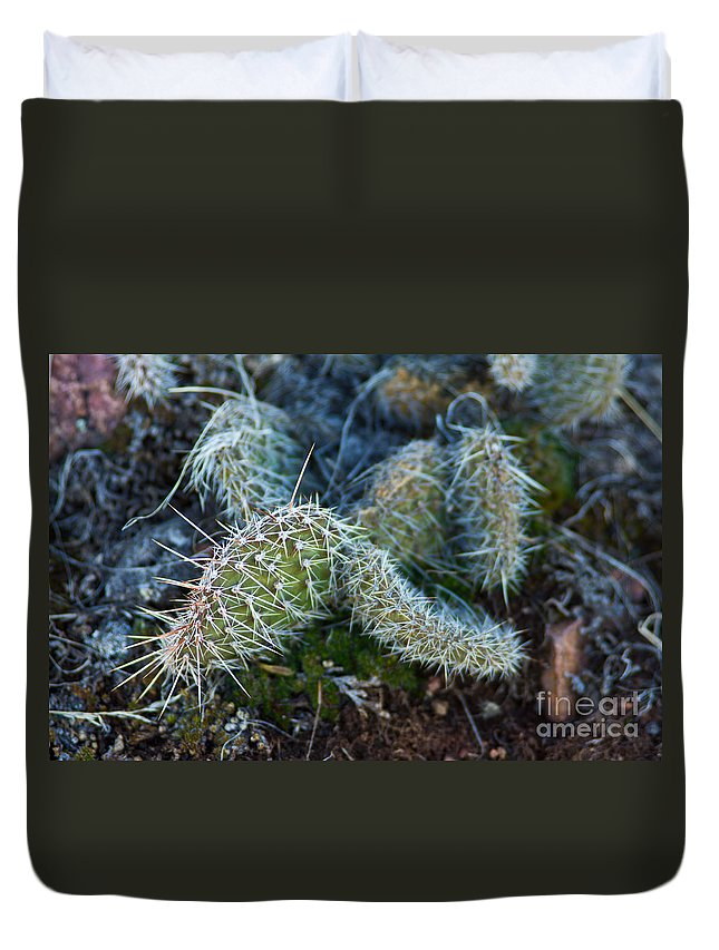 Barbs Duvet Cover featuring the photograph Cactus Plant 1 by Benjamin Reed