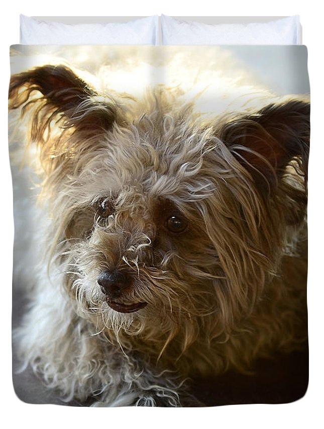 Cairn Terrier Duvet Cover