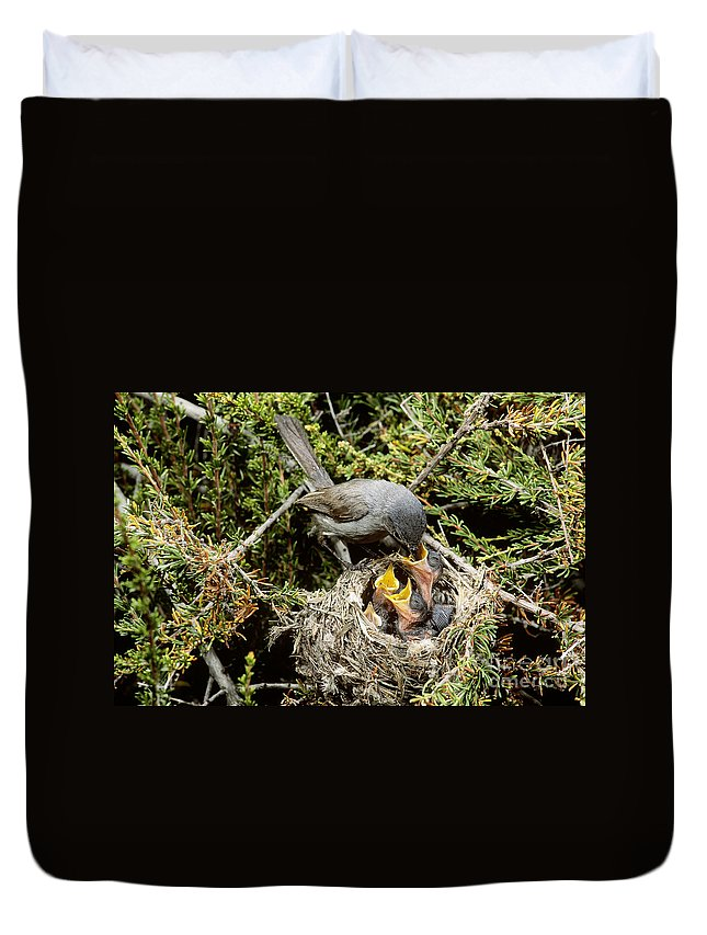 Animal Duvet Cover featuring the photograph California Gnatcatcher Feeding Young by Anthony Mercieca