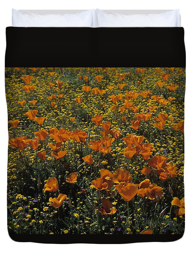 Antelope Valley Duvet Cover featuring the photograph California Gold Poppies by Susan Rovira