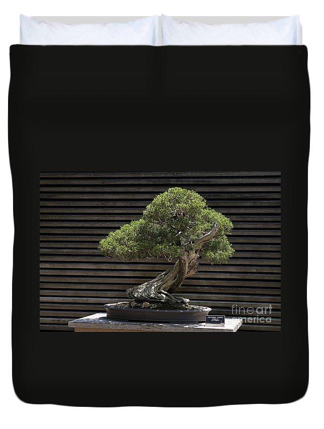 California Juniper Bonsai Tree Duvet Cover For Sale By Jason O Watson