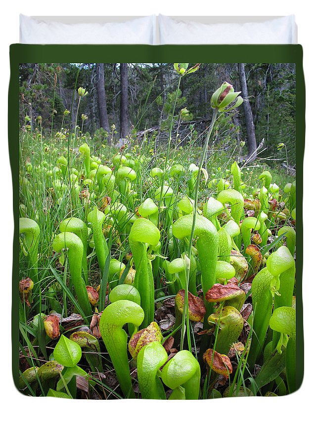Pitcher Duvet Cover featuring the photograph California Pitcher Plant by Dianne Phelps