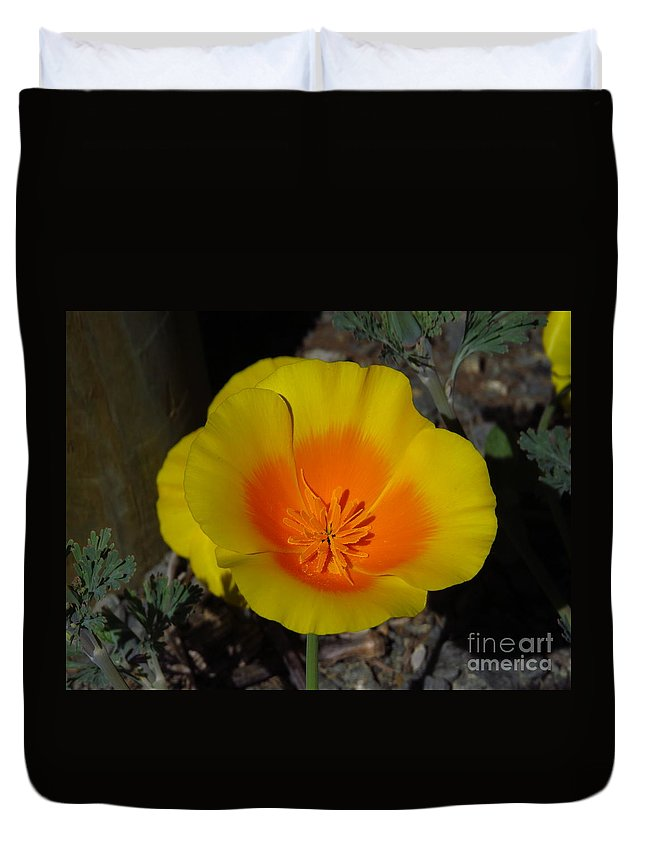 Poppy Duvet Cover featuring the photograph California Poppy by Craig Corwin