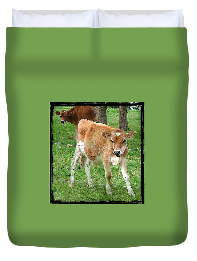 Calf Duvet Cover featuring the photograph Calves by Cassie Peters