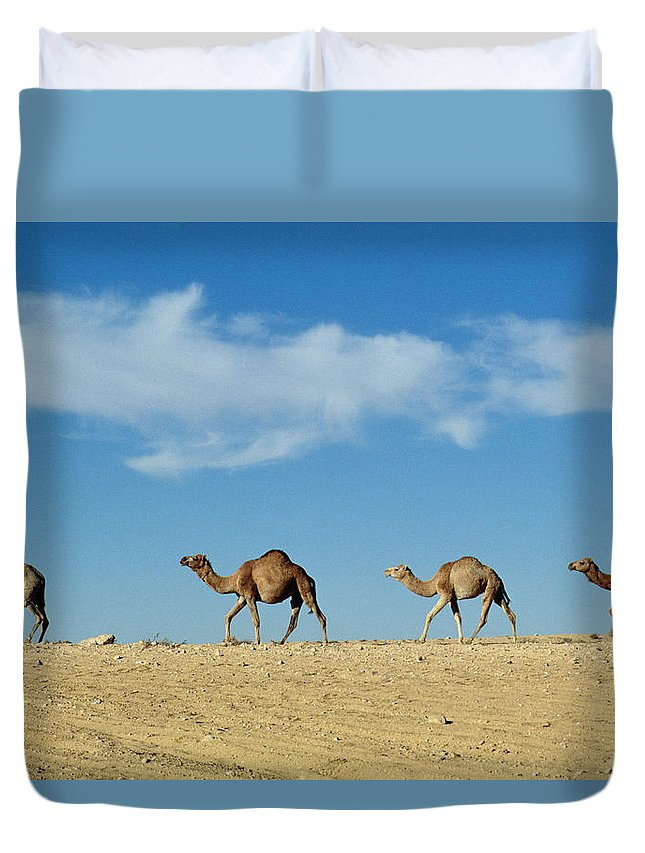 Camels; Animal; Desert; Arid Duvet Cover featuring the photograph Camel Train by Anonymous