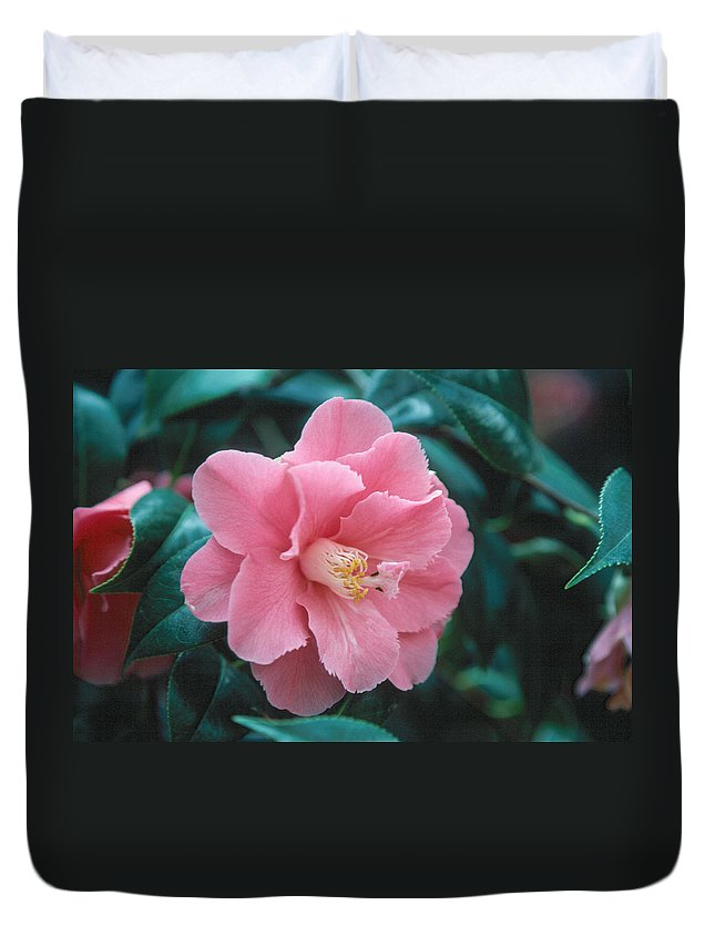 Flower Duvet Cover featuring the photograph Camellia 1 by Andy Shomock