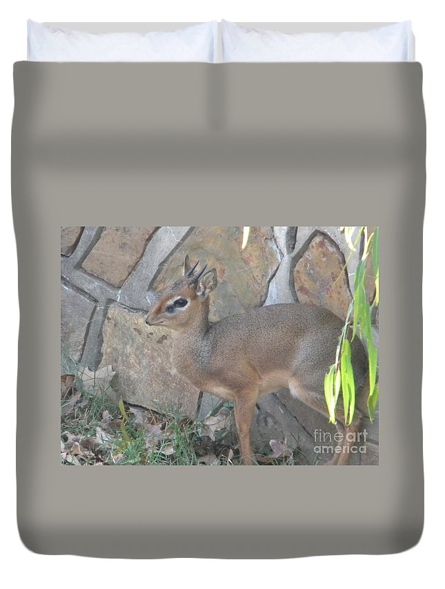Zoo Duvet Cover featuring the photograph Camo by Nathanael Smith