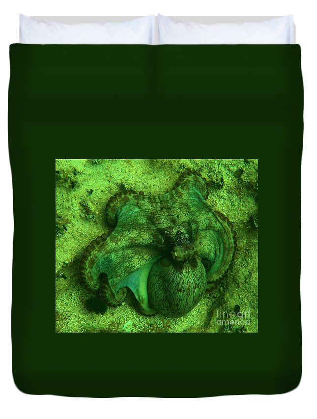Common Octopus Duvet Cover featuring the photograph Camoflauged Octopus by Adam Jewell