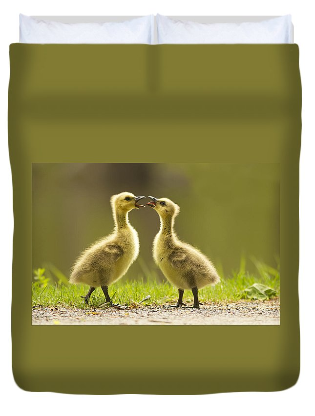 Babies Duvet Cover featuring the photograph Canada Goose Babies by Mircea Costina Photography