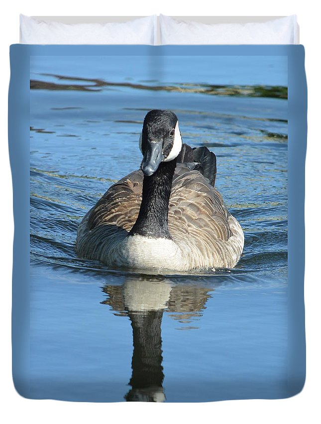 Canada Duvet Cover featuring the photograph Canada Goose Reflecting by Nicki Bennett