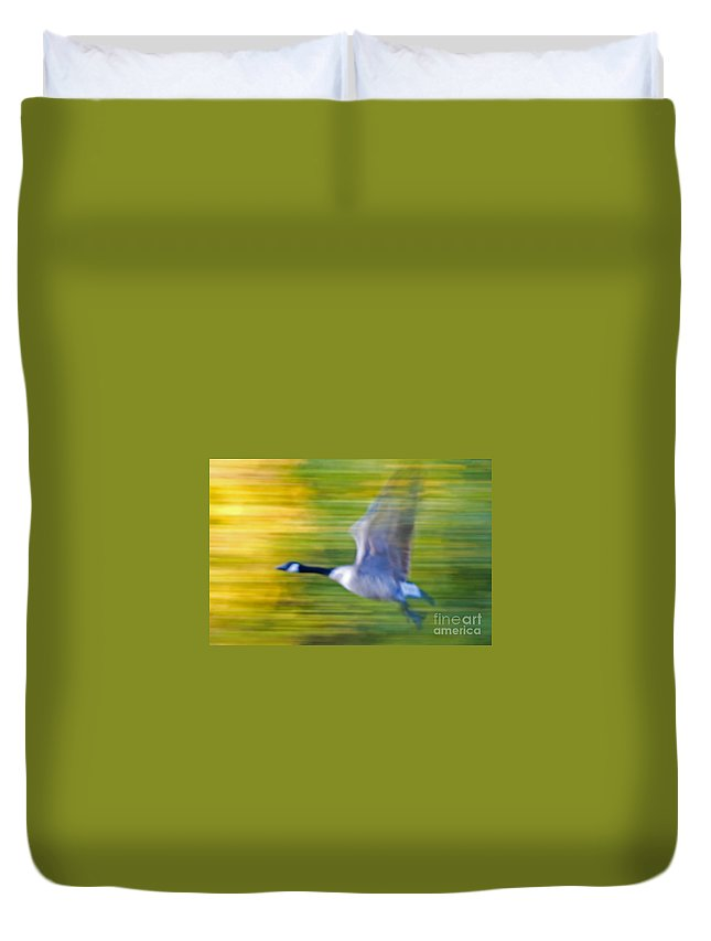 Goose Duvet Cover featuring the photograph Canadian In Flight by Bob Mintie