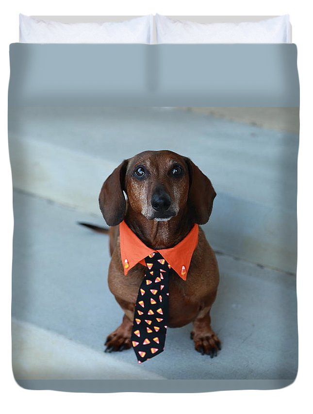 Dachshund Portraits Duvet Cover featuring the photograph Candy Corn Tie by Scott Hill