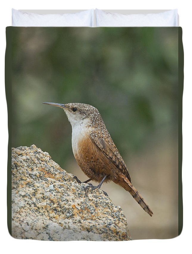 Canyon Wren Duvet Cover featuring the photograph Canyon Wren by Anthony Mercieca