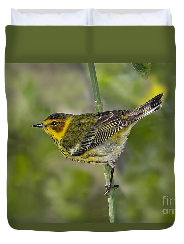 Cape May Warbler Duvet Cover featuring the photograph Cape May Warbler by Anthony Mercieca
