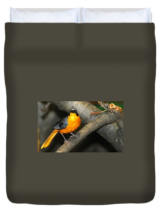 Bird Duvet Cover featuring the photograph Captive Orange Breasted Bird by Optical Playground By MP Ray