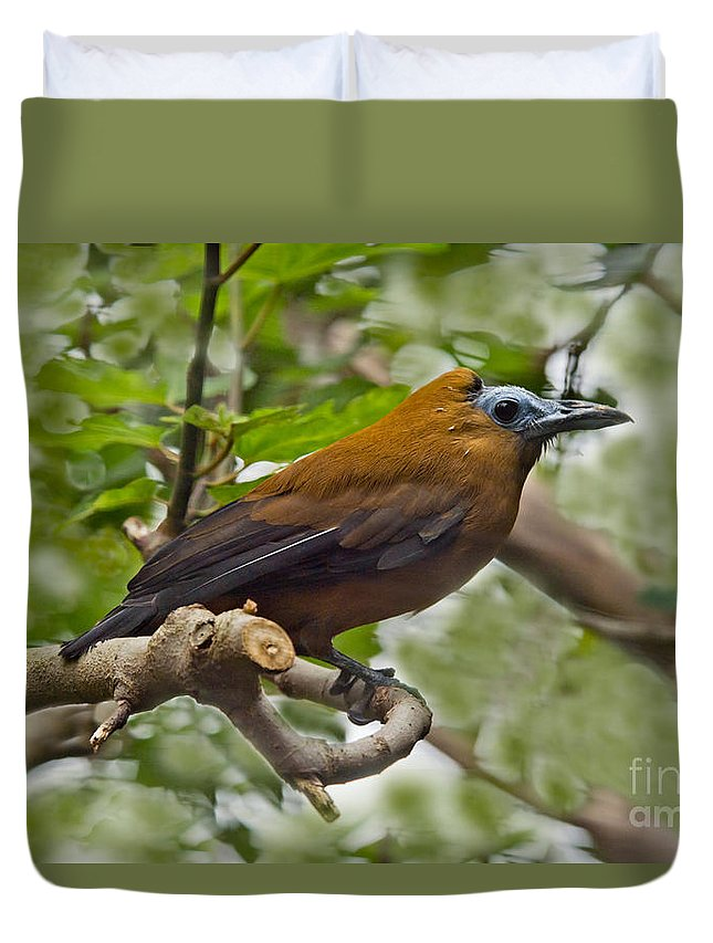 Animal Duvet Cover featuring the photograph Capuchinbird by Anthony Mercieca