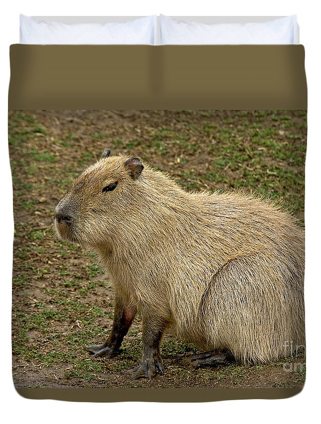 Capybara Duvet Cover featuring the photograph Capybara by Anthony Mercieca
