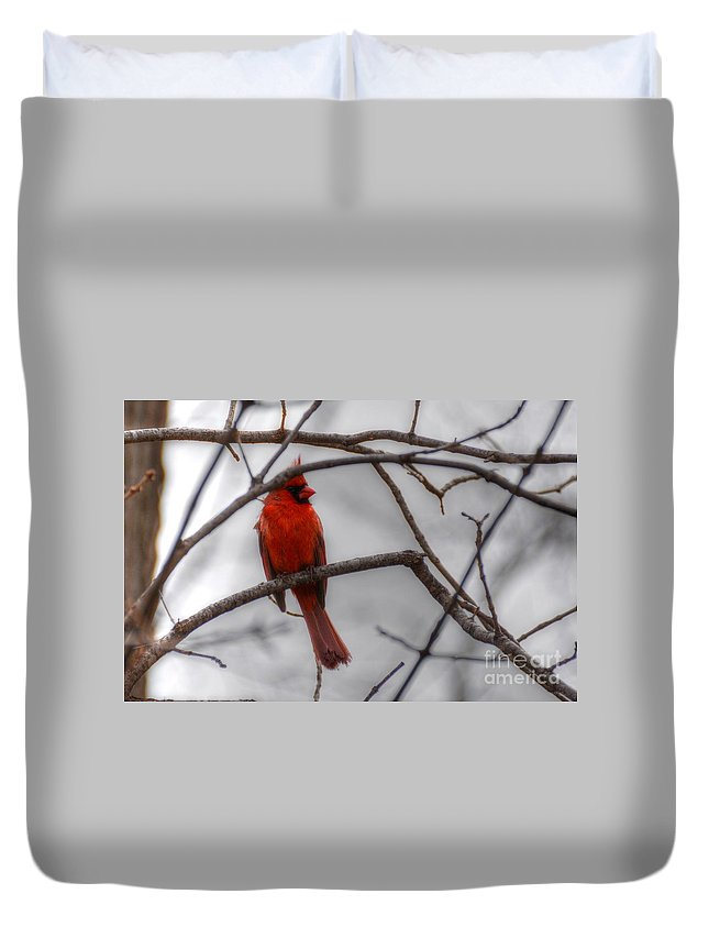 Bird Duvet Cover featuring the photograph Cardinal by M Dale