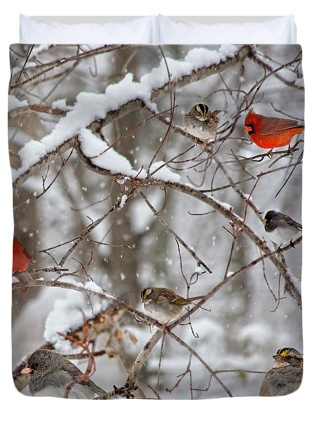 Red Duvet Cover featuring the photograph Cardinal Meeting In The Snow by Betsy Knapp
