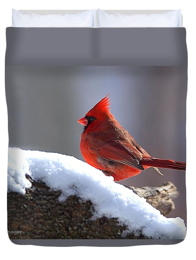 Wildlife Duvet Cover featuring the photograph Cardinal by William Stewart