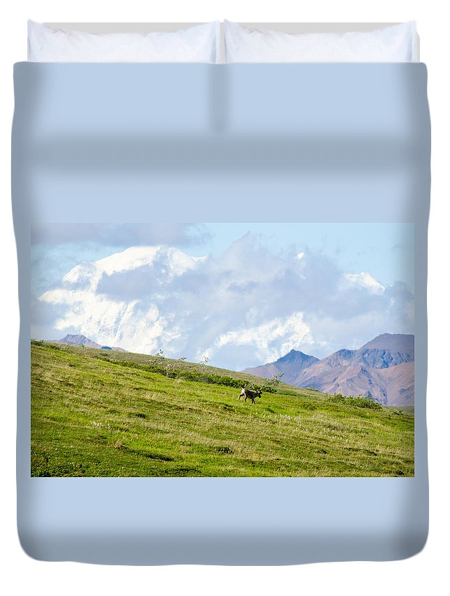Alaska Duvet Cover featuring the photograph Caribou And Mount Mckinley by Gregory Everts